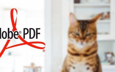 Comment ajouter un fichier PDF dans une newsletter?